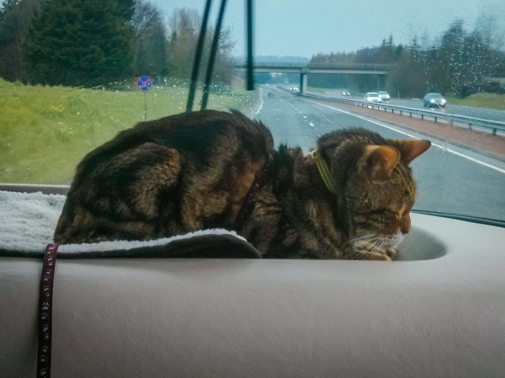 Teddy on the M74