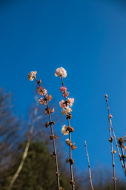 spring-1-of-2.jpg