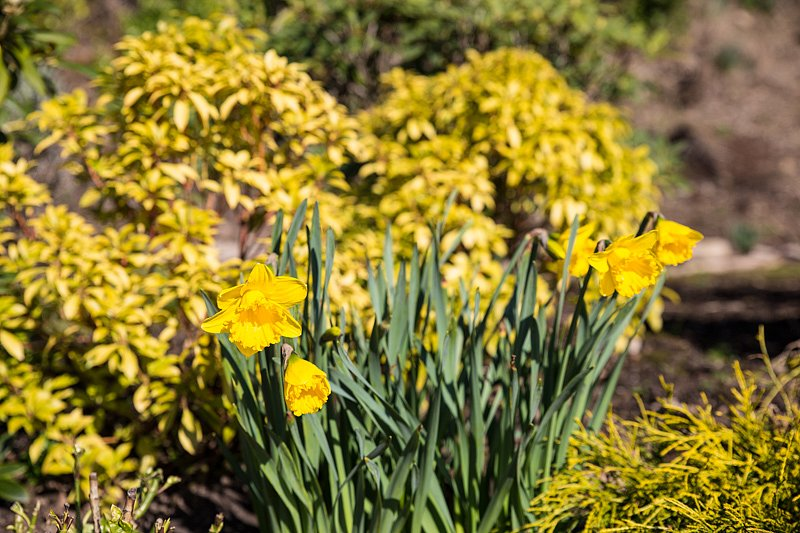 spring-2-of-2.jpg